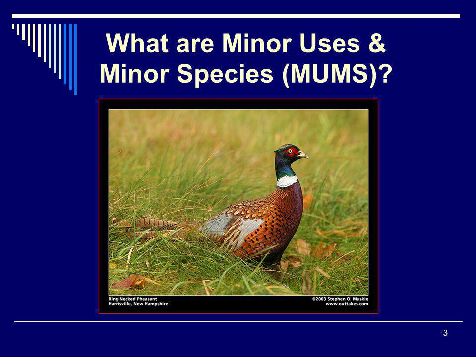 3 What are Minor Uses & Minor Species (MUMS)