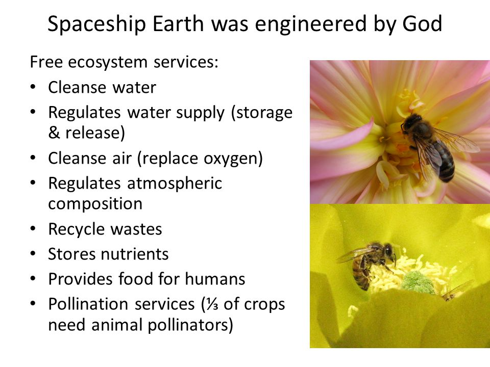 Spaceship Earth was engineered by God Free ecosystem services: Cleanse water Regulates water supply (storage & release) Cleanse air (replace oxygen) Regulates atmospheric composition Recycle wastes Stores nutrients Provides food for humans Pollination services (⅓ of crops need animal pollinators)