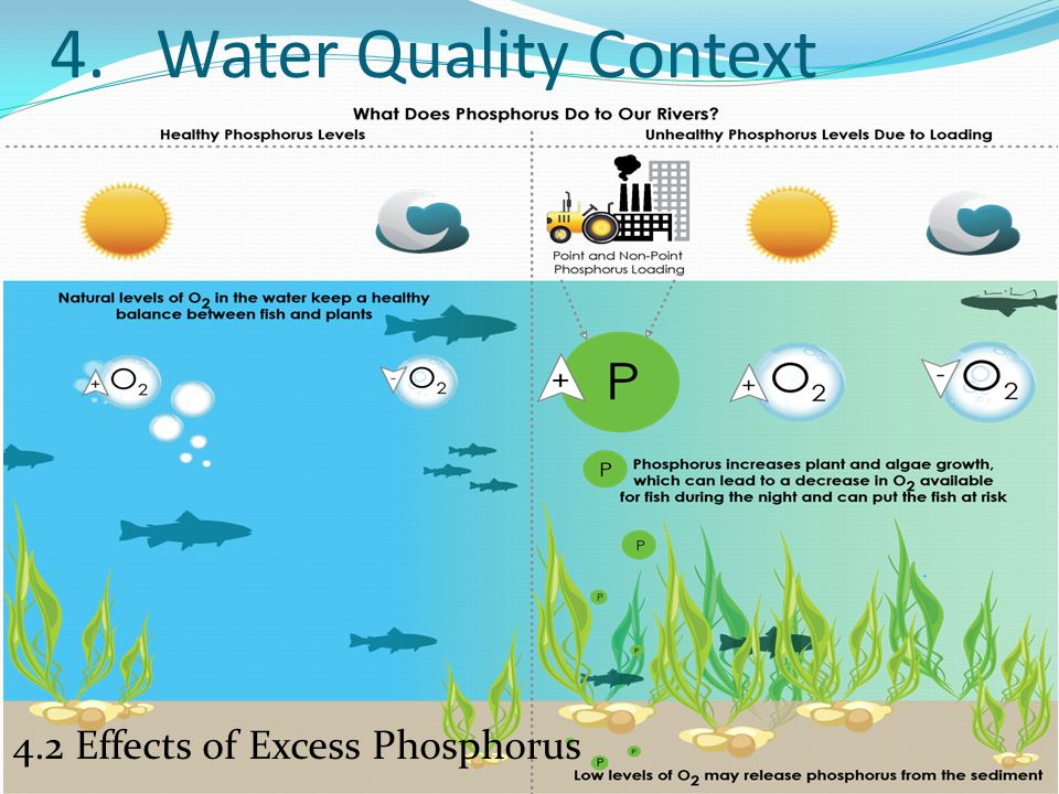 4.2 Effects of Excess Phosphorus
