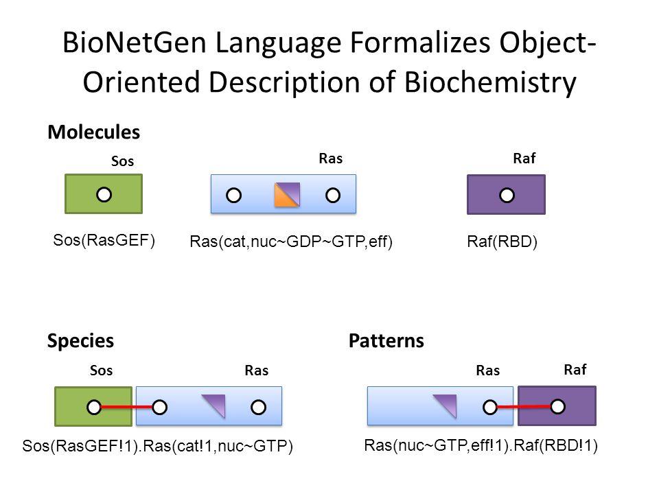 BioNetGen Language Formalizes Object- Oriented Description of Biochemistry Ras Sos Ras Raf Molecules SpeciesPatterns Raf Sos(RasGEF) Ras(cat,nuc~GDP~GTP,eff)Raf(RBD) RasSos Sos(RasGEF!1).Ras(cat!1,nuc~GTP) Ras(nuc~GTP,eff!1).Raf(RBD!1)
