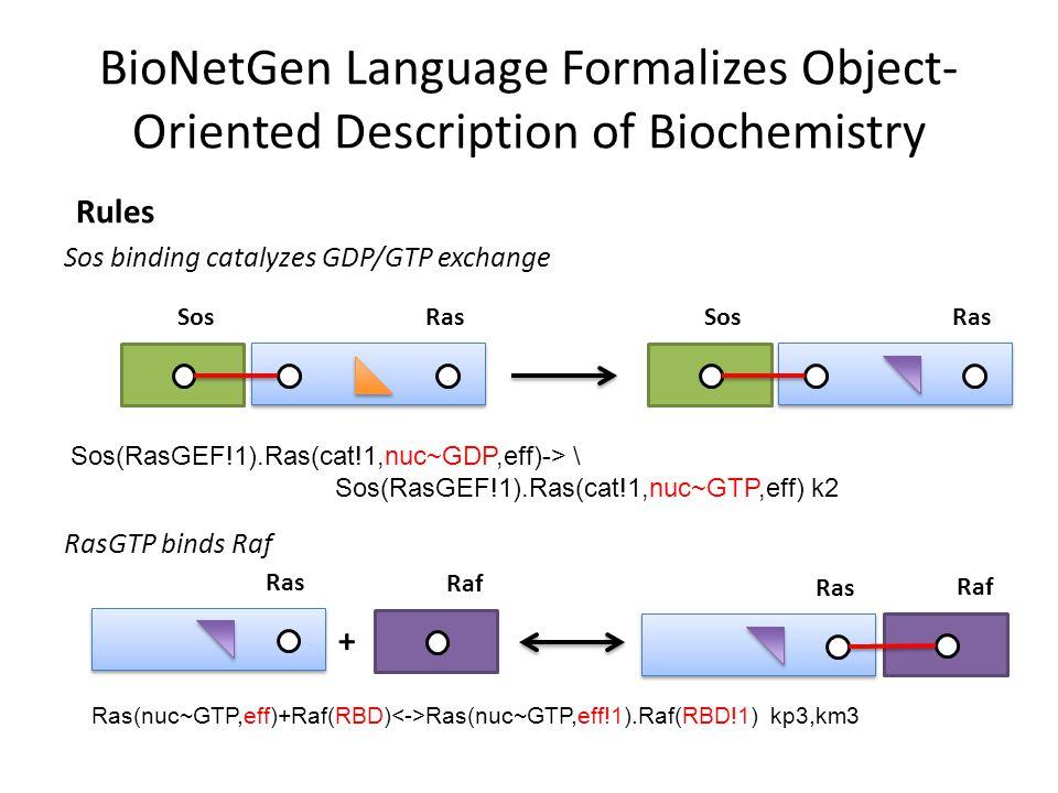 BioNetGen Language Formalizes Object- Oriented Description of Biochemistry Rules Sos binding catalyzes GDP/GTP exchange RasSos RasSos RasGTP binds Raf Ras + Raf Ras Raf Sos(RasGEF!1).Ras(cat!1,nuc~GDP,eff)-> \ Sos(RasGEF!1).Ras(cat!1,nuc~GTP,eff) k2 Ras(nuc~GTP,eff)+Raf(RBD) Ras(nuc~GTP,eff!1).Raf(RBD!1) kp3,km3