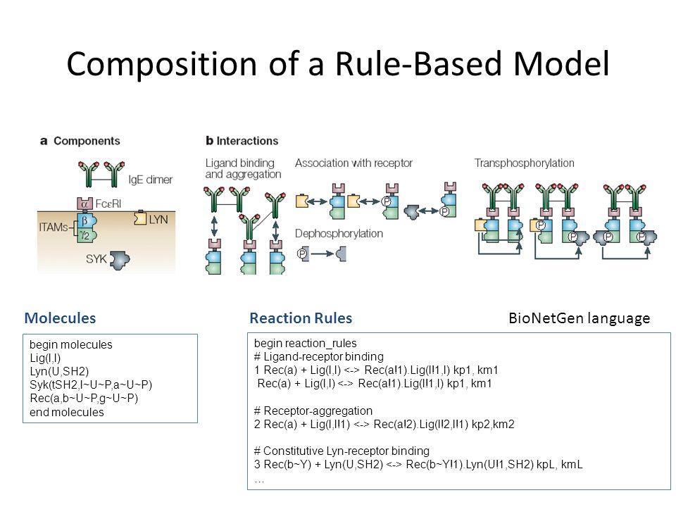 Composition of a Rule-Based Model MoleculesReaction Rules begin reaction_rules # Ligand-receptor binding 1 Rec(a) + Lig(l,l) Rec(a!1).Lig(l!1,l) kp1, km1 Rec(a) + Lig(l,l) Rec(a!1).Lig(l!1,l) kp1, km1 # Receptor-aggregation 2 Rec(a) + Lig(l,l!1) Rec(a!2).Lig(l!2,l!1) kp2,km2 # Constitutive Lyn-receptor binding 3 Rec(b~Y) + Lyn(U,SH2) Rec(b~Y!1).Lyn(U!1,SH2) kpL, kmL … begin molecules Lig(l,l) Lyn(U,SH2) Syk(tSH2,l~U~P,a~U~P) Rec(a,b~U~P,g~U~P) end molecules BioNetGen language