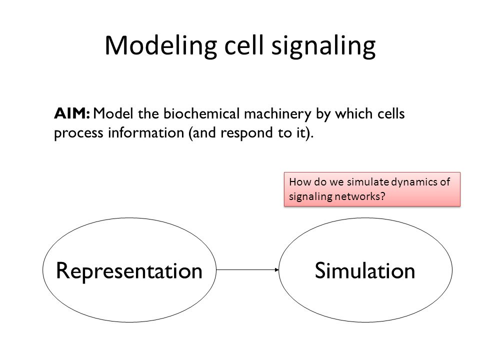 AIM: Model the biochemical machinery by which cells process information (and respond to it).