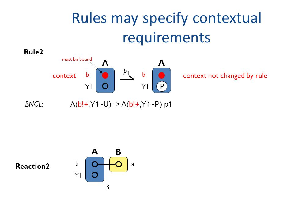 Rules may specify contextual requirements A b Y1 Rule2 p1p1 A b Y1 P context not changed by rule must be bound A b Y1 B a 3 Reaction2 A(b!+,Y1~U) -> A(b!+,Y1~P) p1 BNGL: context