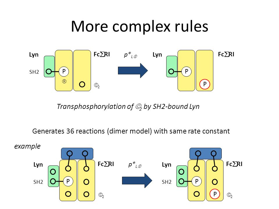 More complex rules Lyn Fc  RI 22  P SH2 p* L  P P Lyn Fc  RI Transphosphorylation of  2 by SH2-bound Lyn Generates 36 reactions (dimer model) with same rate constant Lyn Fc  RI 22 P SH2 p* L  Lyn Fc  RI 22 P SH2 P example