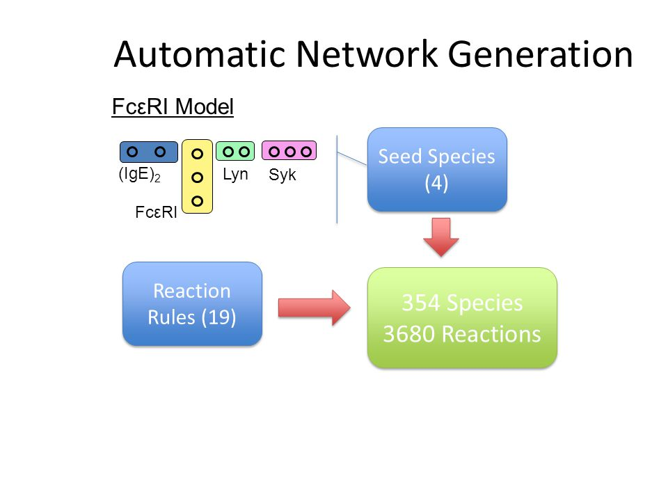 Automatic Network Generation Seed Species (4) Reaction Rules (19) FcεRI Model FcεRI (IgE) 2 Lyn Syk 354 Species 3680 Reactions 354 Species 3680 Reactions