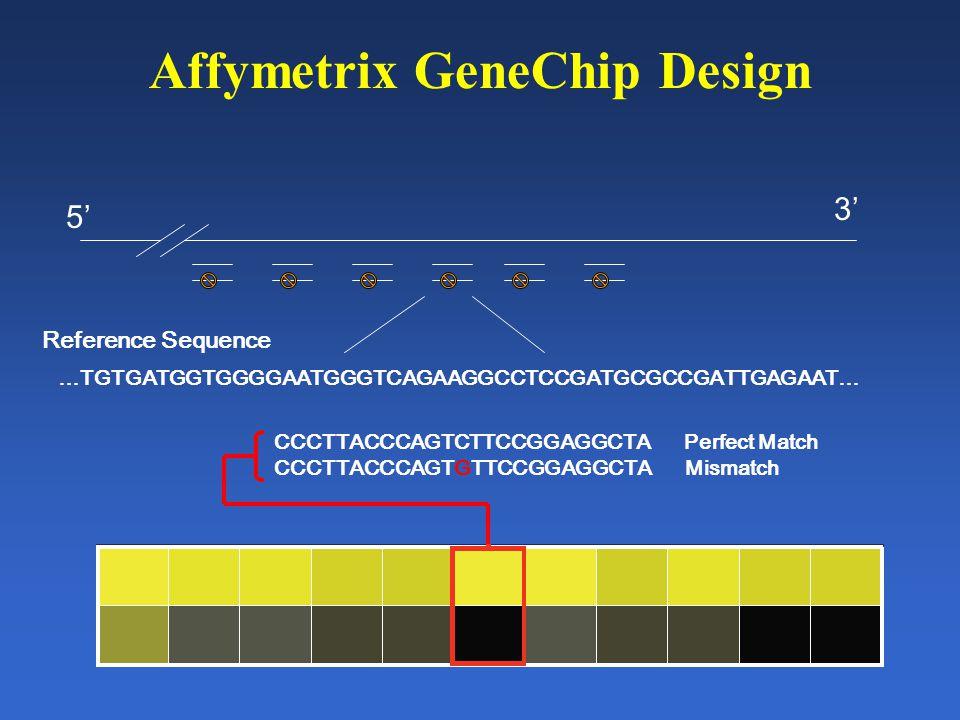 Affymetrix GeneChip Design 5' 3' Reference Sequence …TGTGATGGTGGGGAATGGGTCAGAAGGCCTCCGATGCGCCGATTGAGAAT… CCCTTACCCAGTCTTCCGGAGGCTA Perfect Match CCCTTACCCAGTGTTCCGGAGGCTA Mismatch
