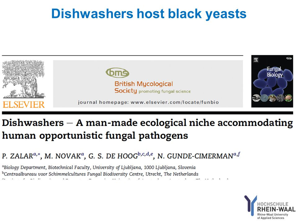 Dishwashers host black yeasts