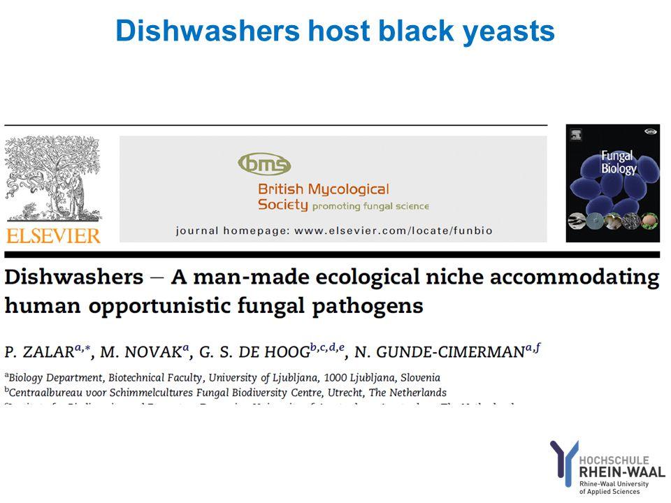 Dishwashers host black yeasts