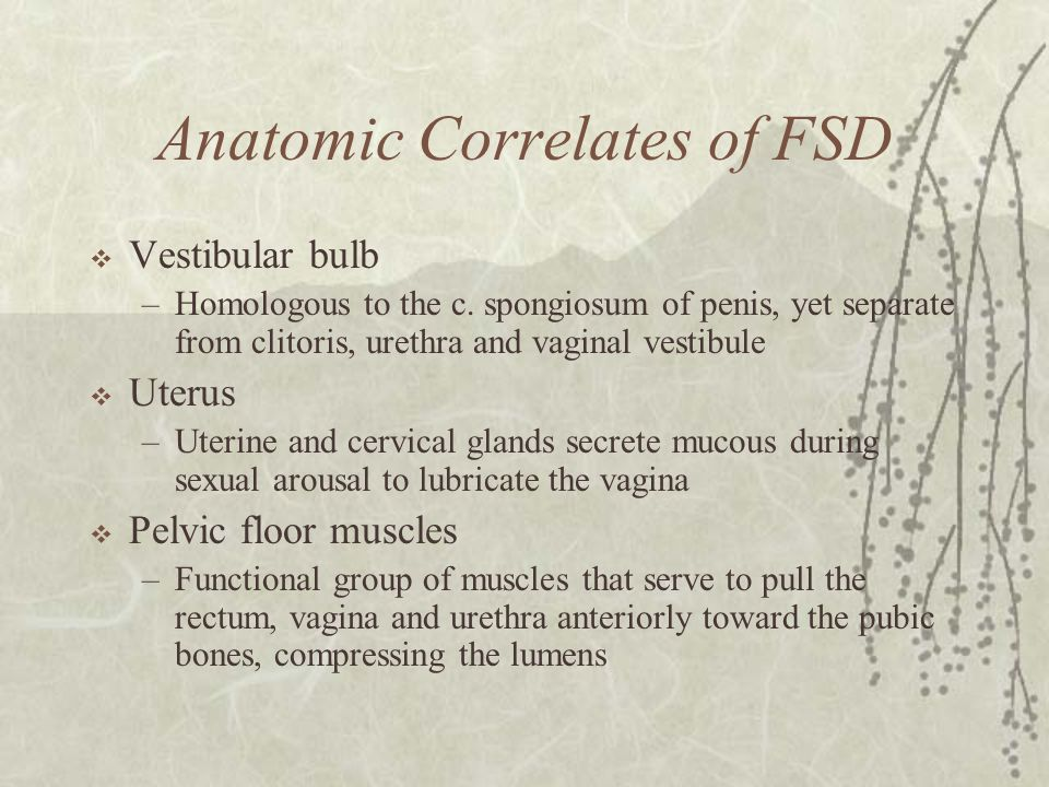 Anatomic Correlates of FSD  Vestibular bulb –Homologous to the c. spongiosum of penis, yet separate from clitoris, urethra and vaginal vestibule  Ut
