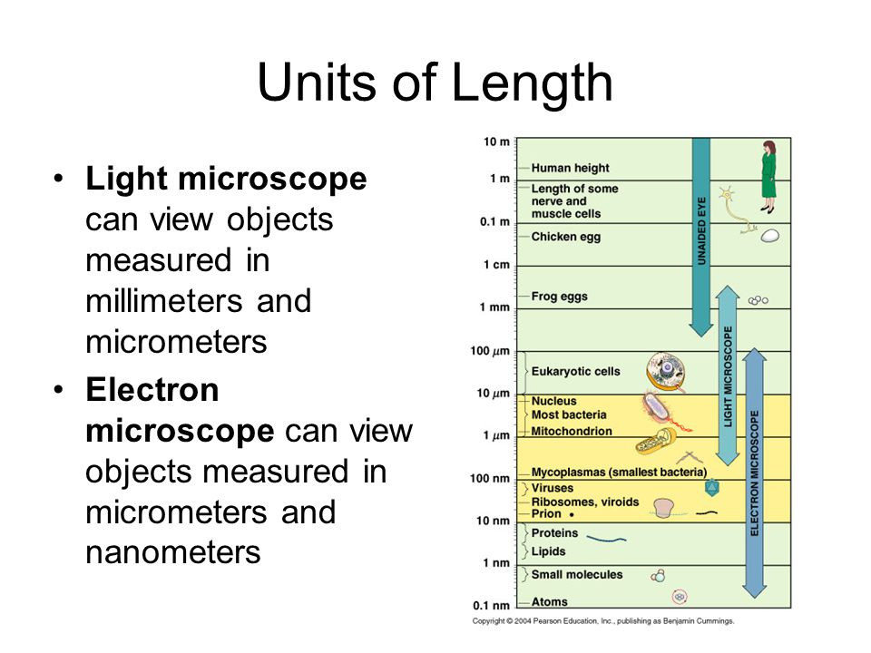 Units of Length Light microscope can view objects measured in millimeters and micrometers Electron microscope can view objects measured in micrometers
