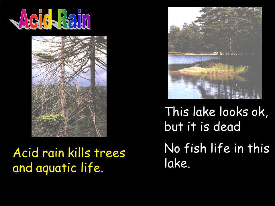 This lake looks ok, but it is dead No fish life in this lake. Acid rain kills trees and aquatic life.
