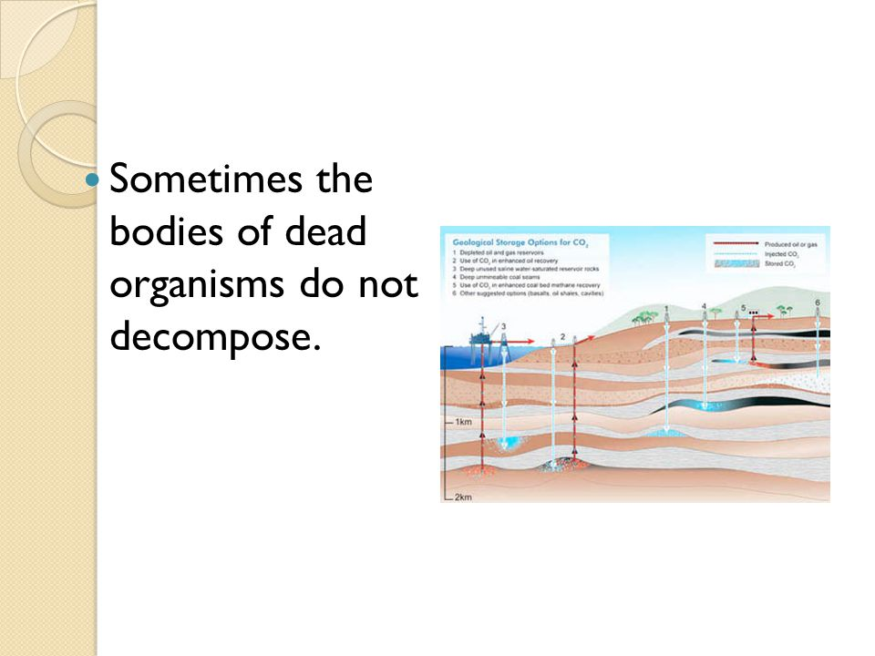 Sometimes the bodies of dead organisms do not decompose.
