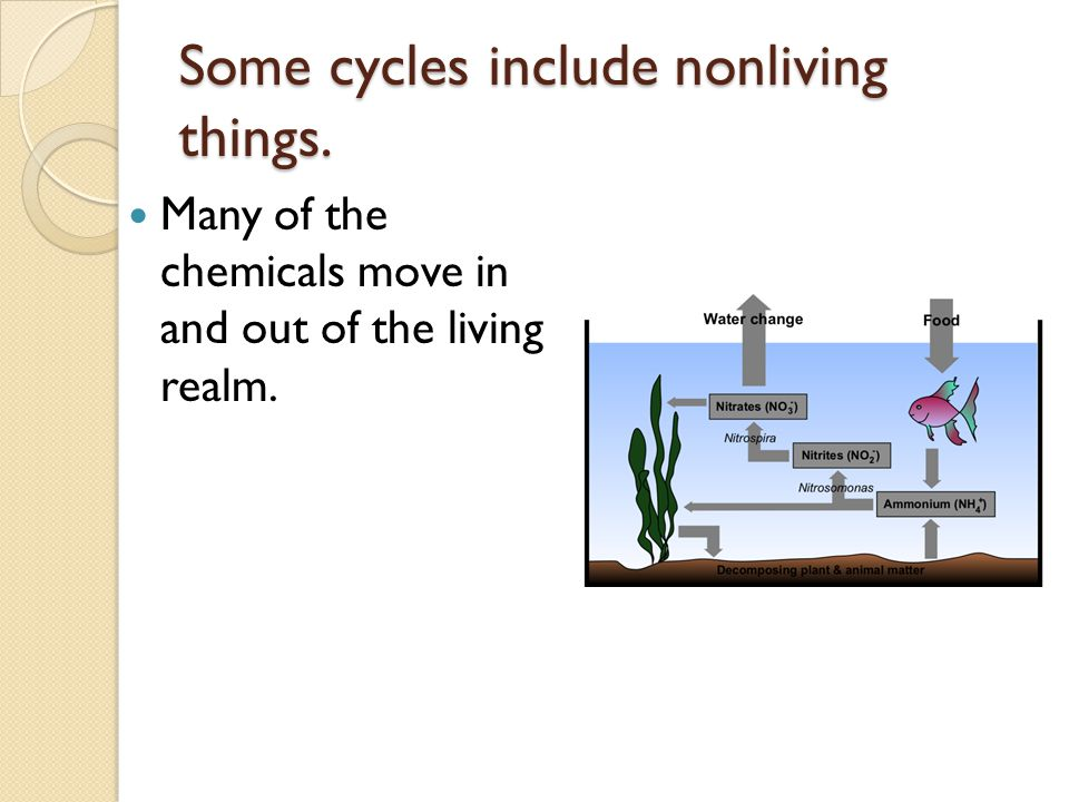 Some cycles include nonliving things. Many of the chemicals move in and out of the living realm.
