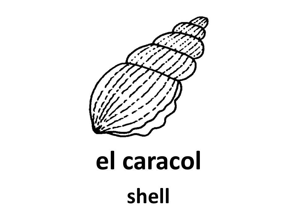 el caracol shell