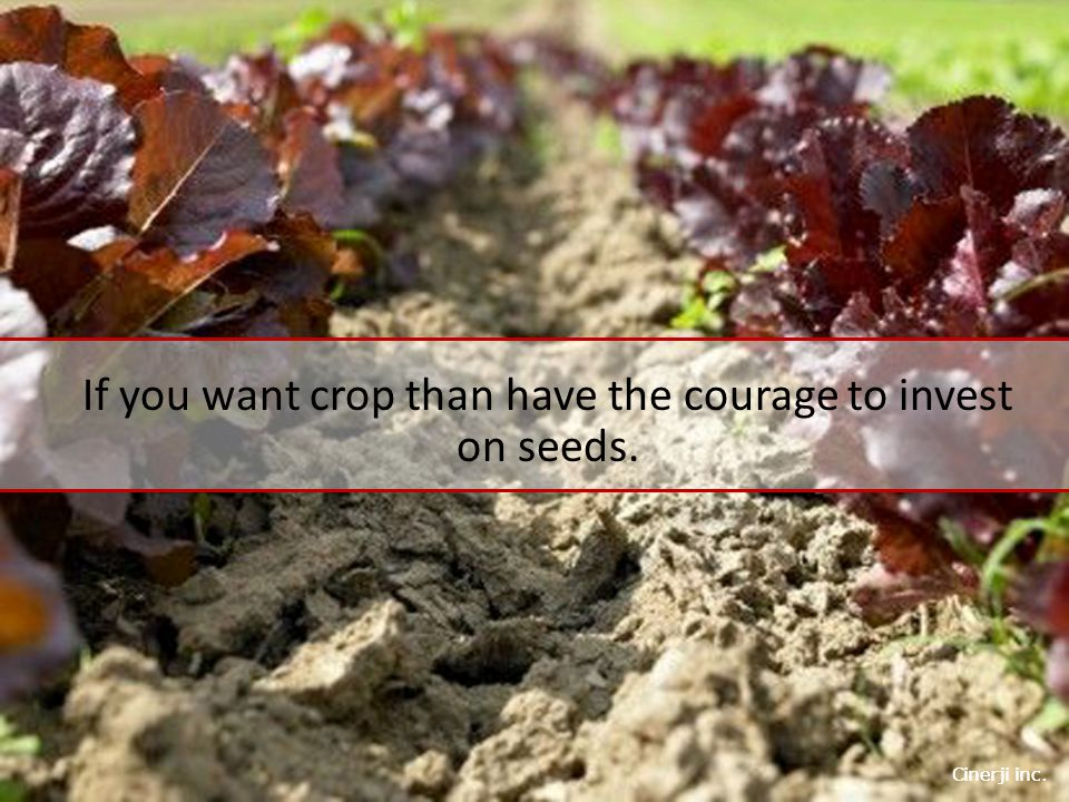 Cinerji inc. If you want crop than have the courage to invest on seeds.