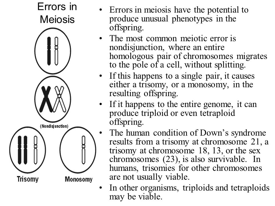 Errors in Meiosis Errors in meiosis have the potential to produce unusual phenotypes in the offspring. The most common meiotic error is nondisjunction