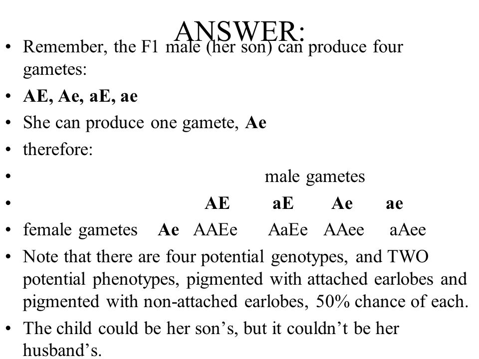 ANSWER: Remember, the F1 male (her son) can produce four gametes: AE, Ae, aE, ae She can produce one gamete, Ae therefore: male gametes AE aE Ae ae fe