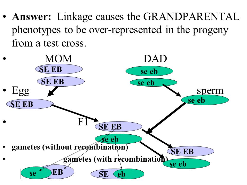 Answer: Linkage causes the GRANDPARENTAL phenotypes to be over-represented in the progeny from a test cross.