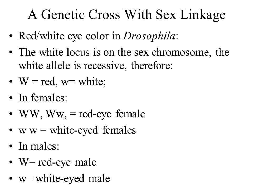 A Genetic Cross With Sex Linkage Red/white eye color in Drosophila: The white locus is on the sex chromosome, the white allele is recessive, therefore: W = red, w= white; In females: WW, Ww, = red-eye female w w = white-eyed females In males: W= red-eye male w= white-eyed male