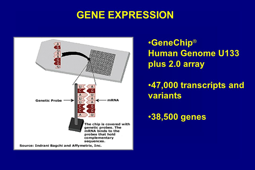 GENE EXPRESSION GeneChip ® Human Genome U133 plus 2.0 array 47,000 transcripts and variants 38,500 genes