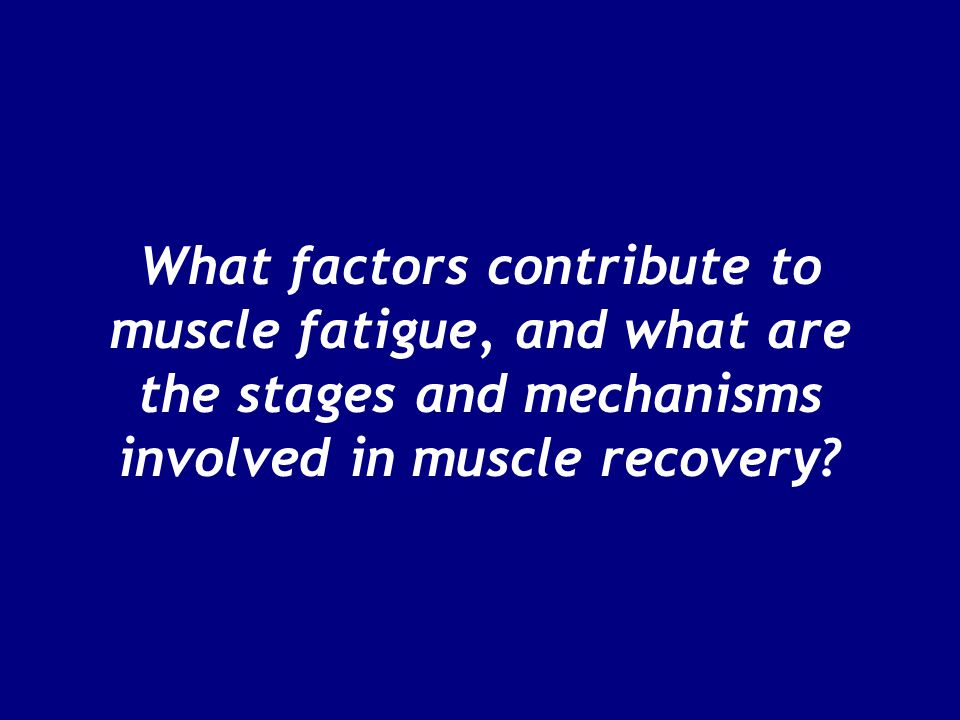 What factors contribute to muscle fatigue, and what are the stages and mechanisms involved in muscle recovery?