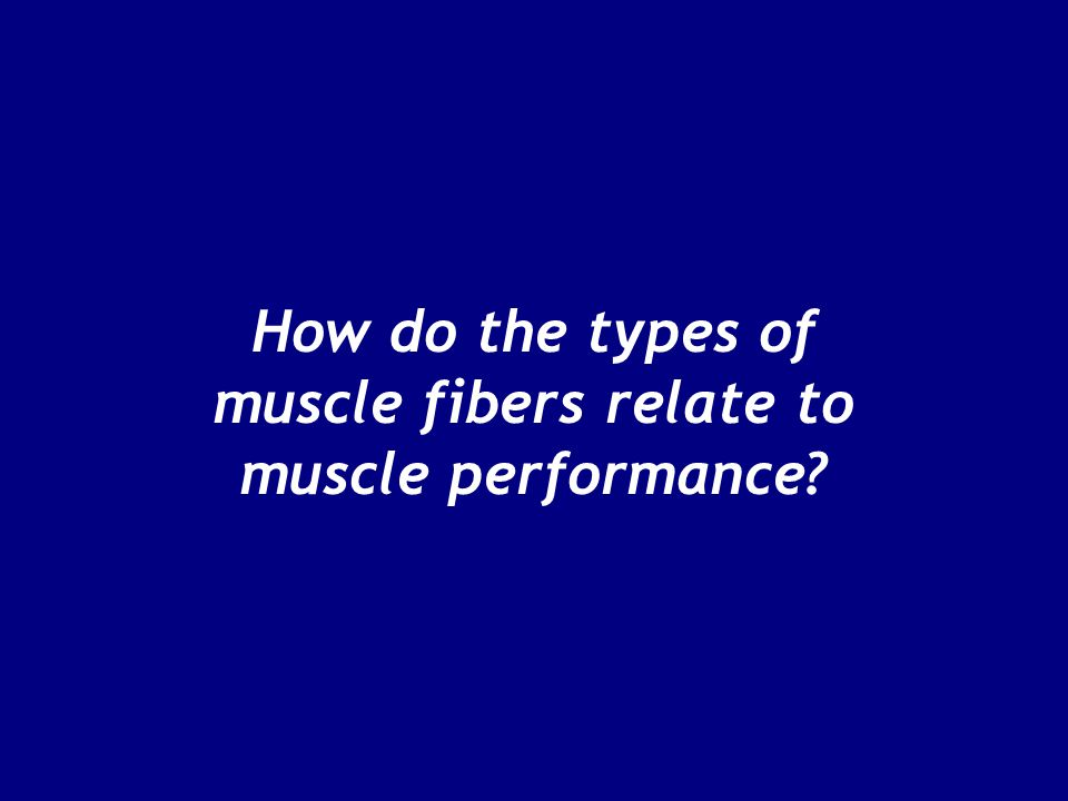 How do the types of muscle fibers relate to muscle performance?