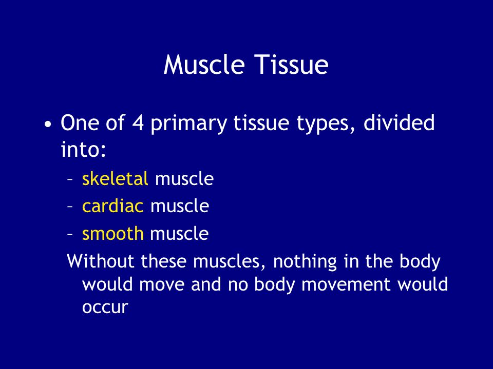 Muscle Tissue One of 4 primary tissue types, divided into: –skeletal muscle –cardiac muscle –smooth muscle Without these muscles, nothing in the body would move and no body movement would occur