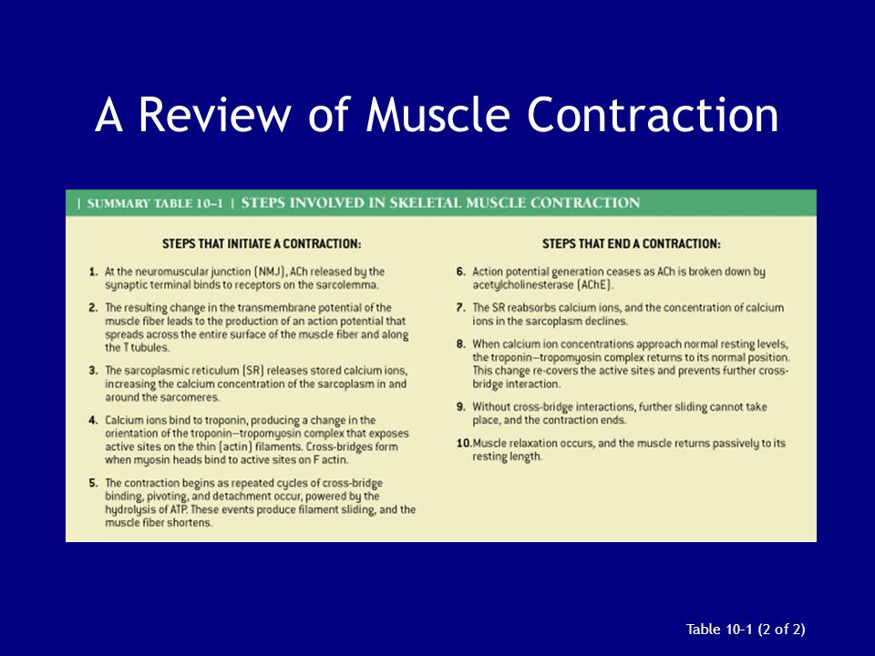 A Review of Muscle Contraction Table 10–1 (2 of 2)