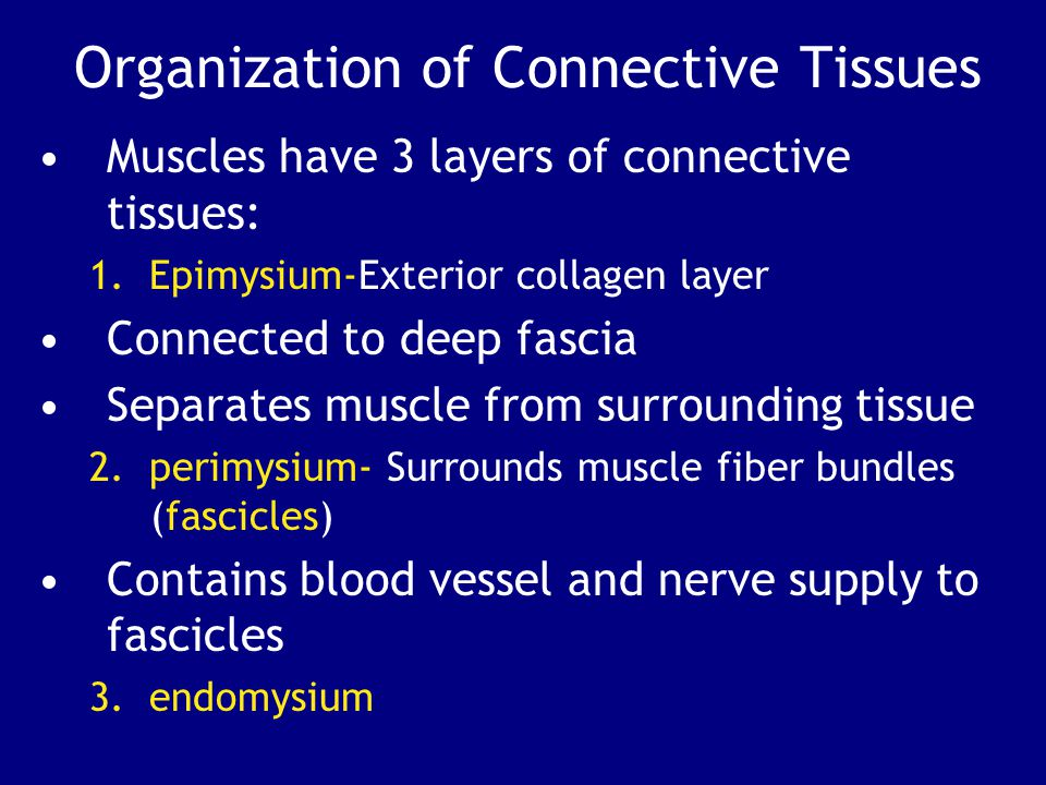 Organization of Connective Tissues Muscles have 3 layers of connective tissues: 1.