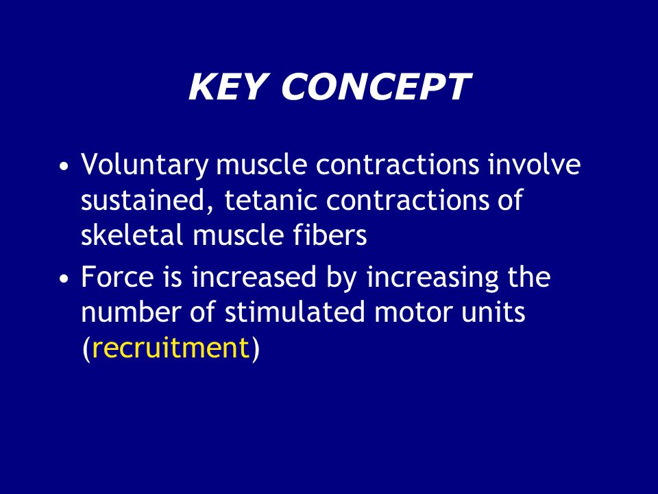 KEY CONCEPT Voluntary muscle contractions involve sustained, tetanic contractions of skeletal muscle fibers Force is increased by increasing the number of stimulated motor units (recruitment)