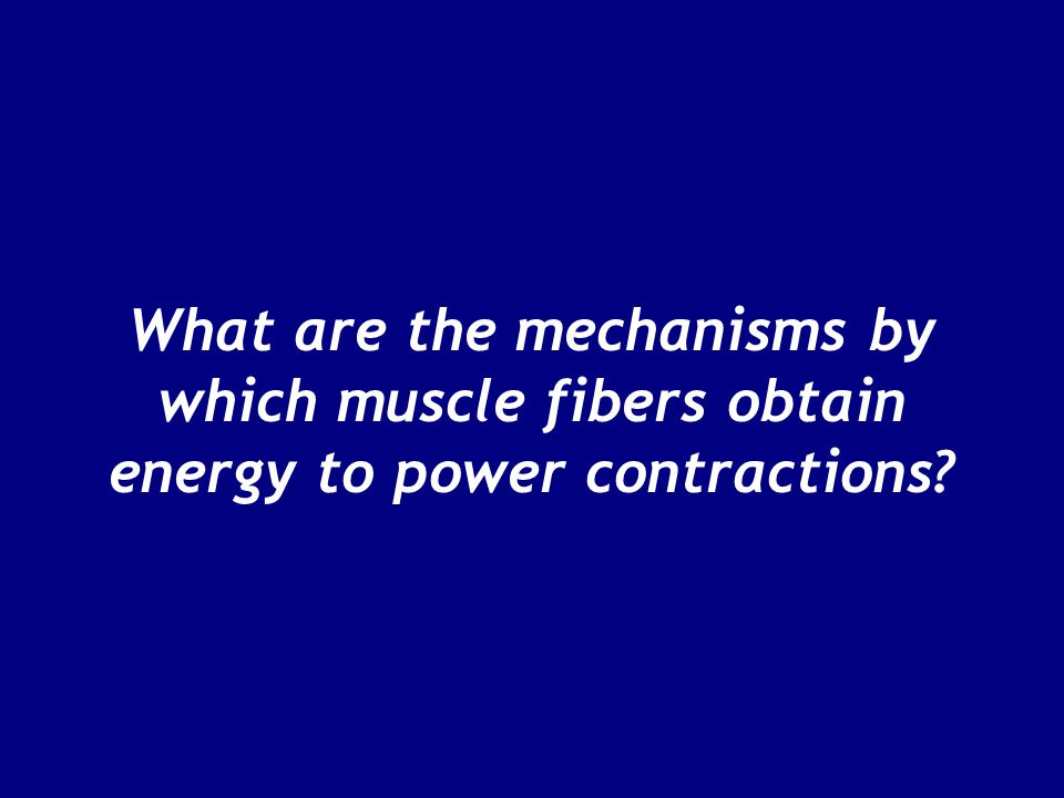 What are the mechanisms by which muscle fibers obtain energy to power contractions?