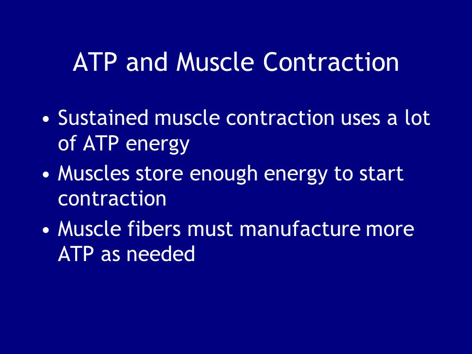 ATP and Muscle Contraction Sustained muscle contraction uses a lot of ATP energy Muscles store enough energy to start contraction Muscle fibers must manufacture more ATP as needed