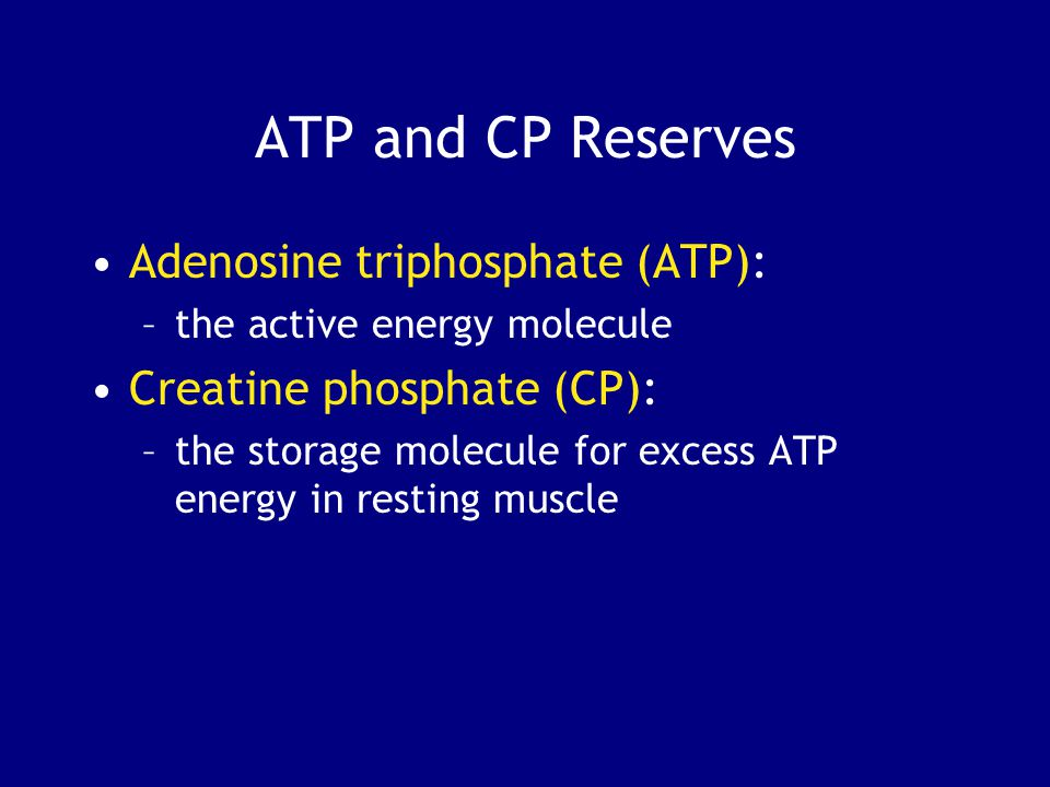ATP and CP Reserves Adenosine triphosphate (ATP): –the active energy molecule Creatine phosphate (CP): –the storage molecule for excess ATP energy in resting muscle