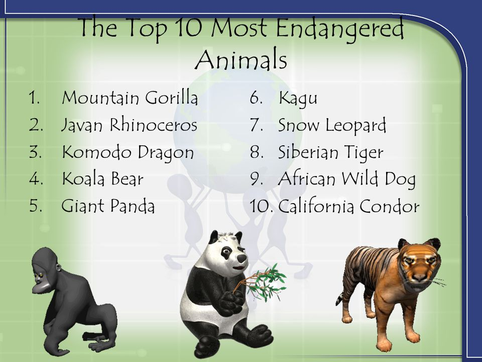 The Top 10 Most Endangered Animals 1.Mountain Gorilla 2.Javan Rhinoceros 3.Komodo Dragon 4.Koala Bear 5.Giant Panda 6.Kagu 7.Snow Leopard 8.Siberian Tiger 9.African Wild Dog 10.California Condor