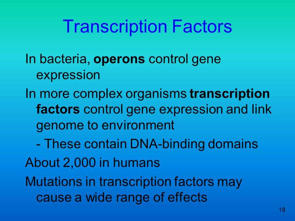 18 Transcription Factors In bacteria, operons control gene expression In more complex organisms transcription factors control gene expression and link