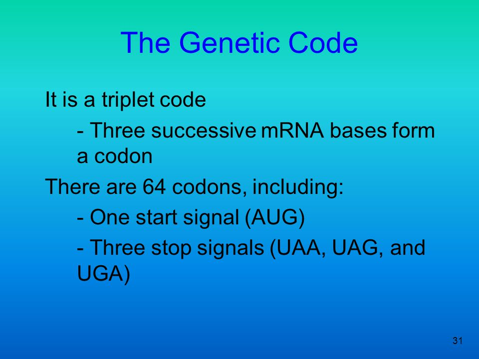 31 The Genetic Code It is a triplet code - Three successive mRNA bases form a codon There are 64 codons, including: - One start signal (AUG) - Three s