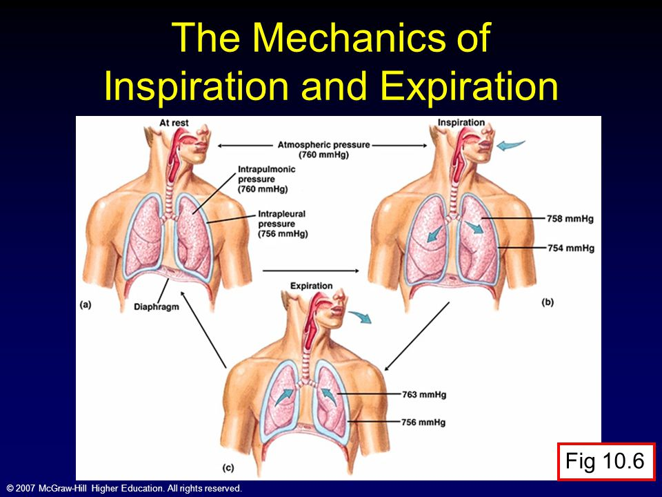 © 2007 McGraw-Hill Higher Education. All rights reserved. The Mechanics of Inspiration and Expiration Fig 10.6