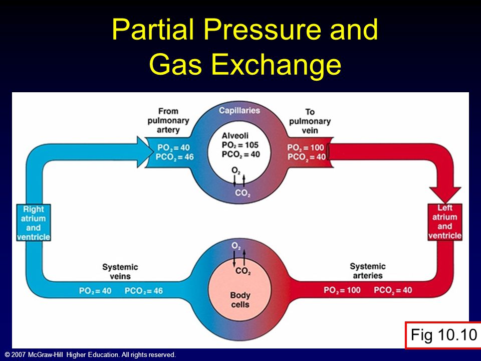 © 2007 McGraw-Hill Higher Education. All rights reserved. Partial Pressure and Gas Exchange Fig 10.10