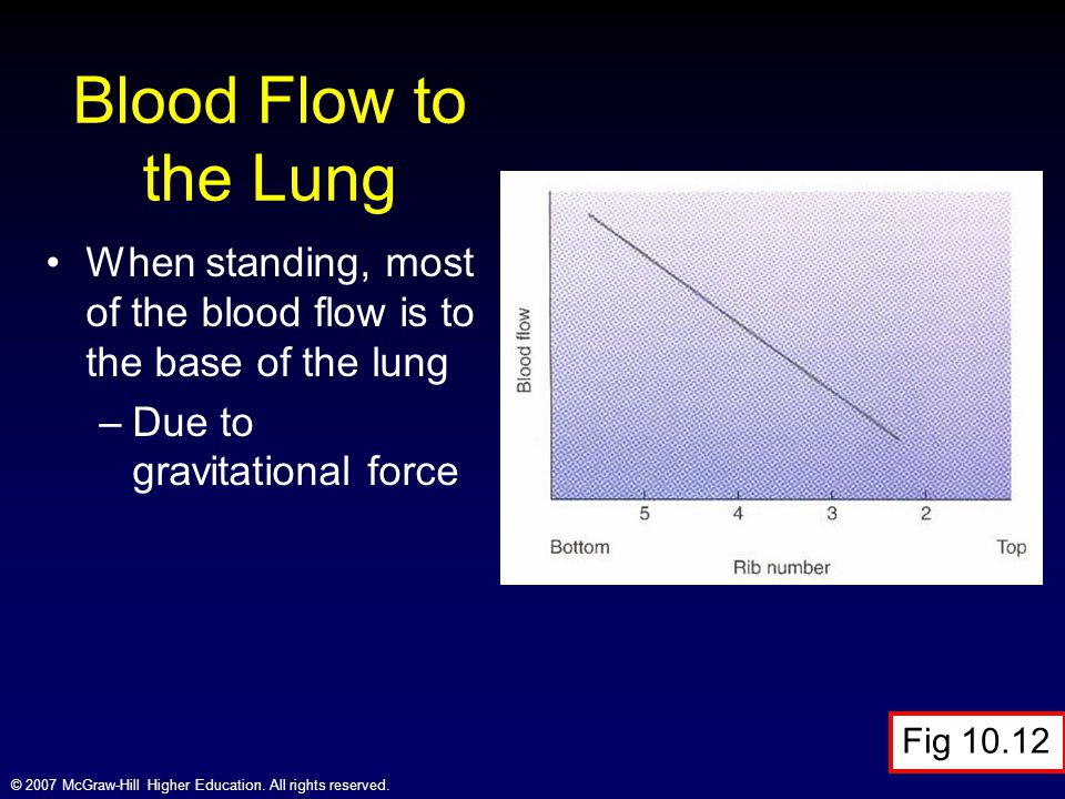 © 2007 McGraw-Hill Higher Education. All rights reserved. Blood Flow to the Lung When standing, most of the blood flow is to the base of the lung –Due