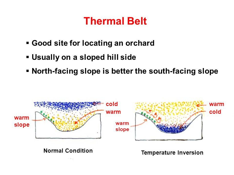 Thermal Belt Normal Condition Temperature Inversion cold warmcold warm warm slope  Good site for locating an orchard  Usually on a sloped hill side  North-facing slope is better the south-facing slope