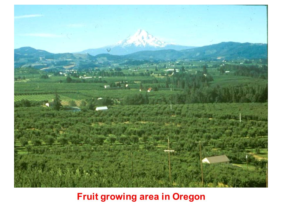 Fruit growing area in Oregon