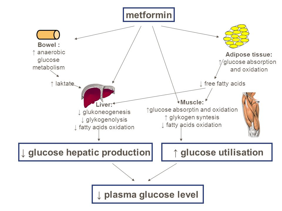 metformin Bowel : ↑ anaerobic glucose metabolism Adipose tissue: ↑ glucose absorption and oxidation Liver: ↓ glukoneogenesis ↓ glykogenolysis ↓ fatty acids oxidation Muscle: ↑glucose absorptin and oxidation ↑ glykogen syntesis ↓ fatty acids oxidation ↑ laktate↓ free fatty acids ↓ glucose hepatic production ↑ glucose utilisation ↓ plasma glucose level