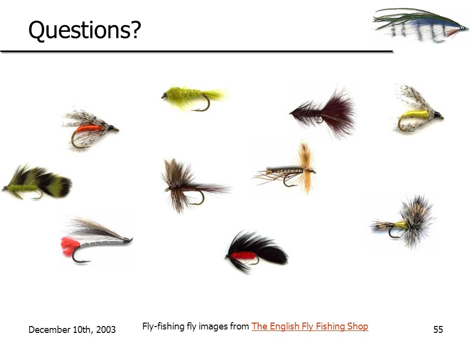 December 10th, 200355 Questions? Fly-fishing fly images from The English Fly Fishing ShopThe English Fly Fishing Shop