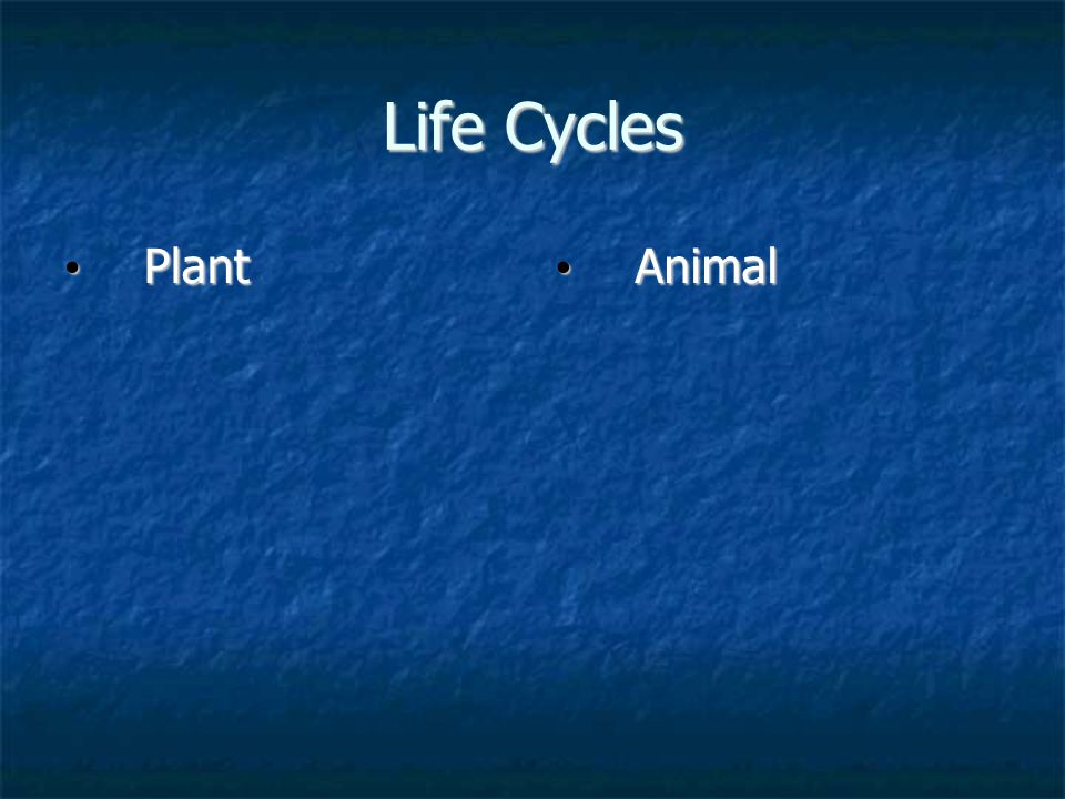 Life Cycles Plant Plant Animal Animal