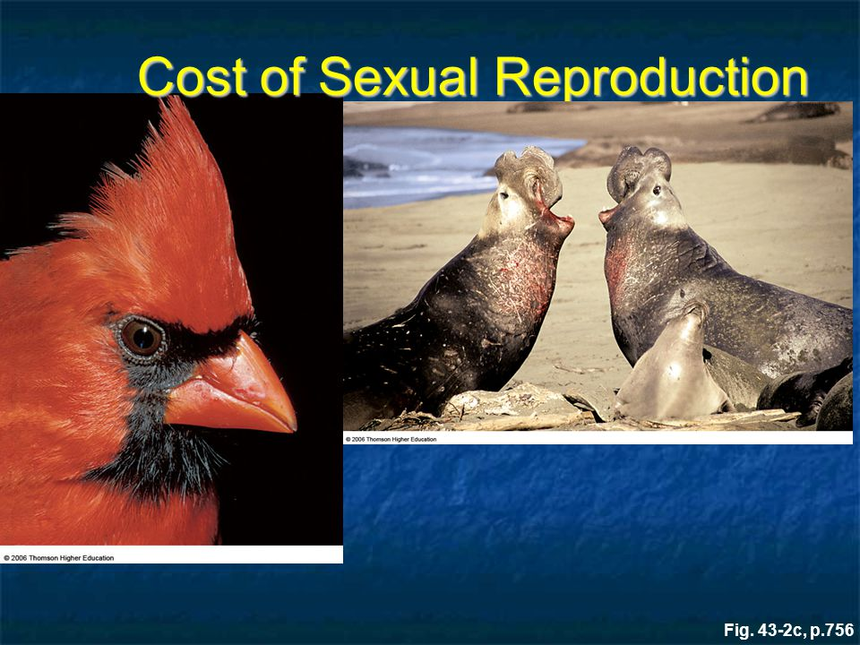 Fig. 43-2c, p.756 Cost of Sexual Reproduction