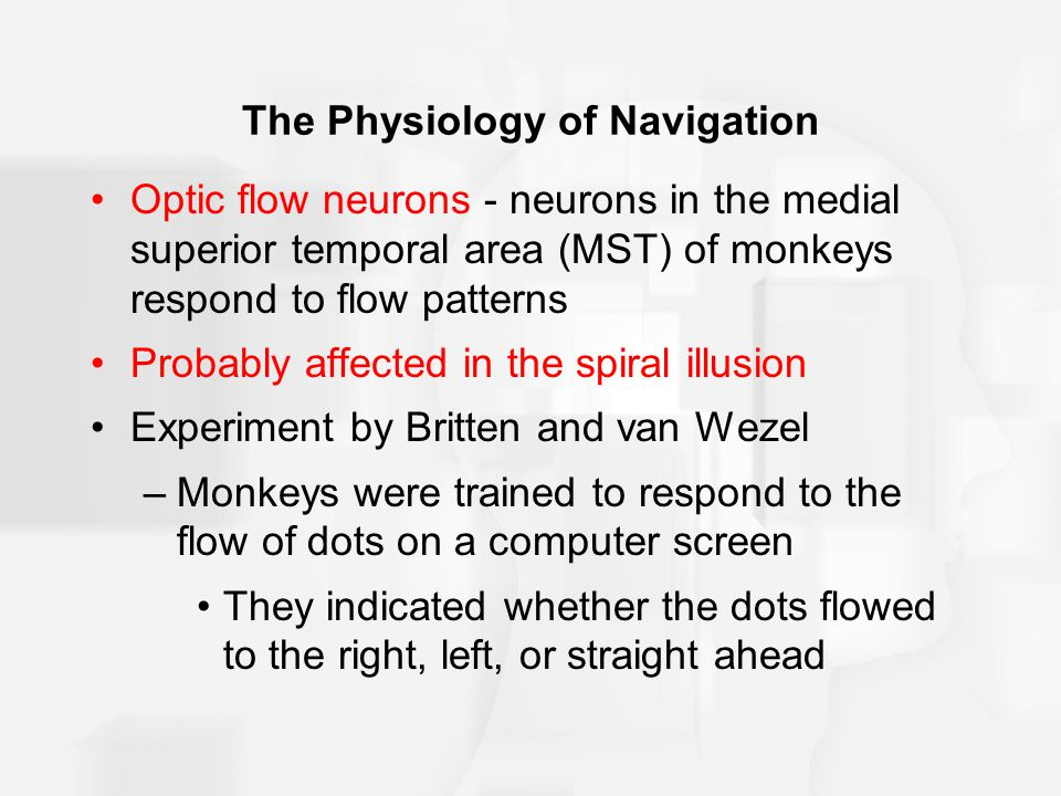 The Physiology of Navigation Optic flow neurons - neurons in the medial superior temporal area (MST) of monkeys respond to flow patterns Probably affected in the spiral illusion Experiment by Britten and van Wezel –Monkeys were trained to respond to the flow of dots on a computer screen They indicated whether the dots flowed to the right, left, or straight ahead