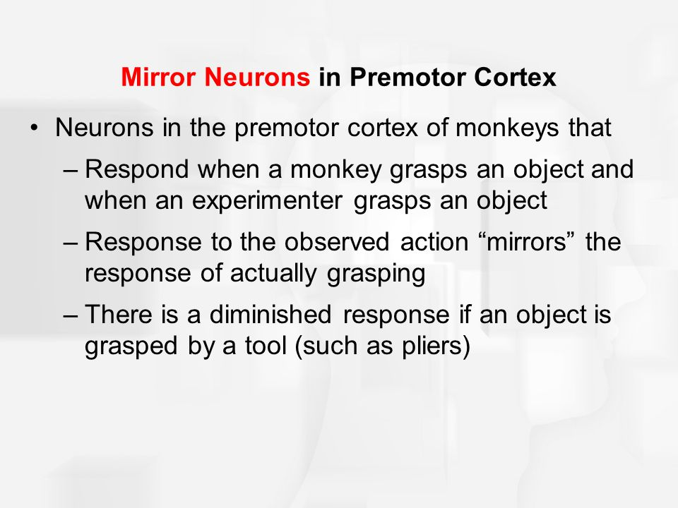 Mirror Neurons in Premotor Cortex Neurons in the premotor cortex of monkeys that –Respond when a monkey grasps an object and when an experimenter grasps an object –Response to the observed action mirrors the response of actually grasping –There is a diminished response if an object is grasped by a tool (such as pliers)