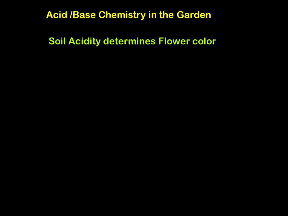 Acid /Base Chemistry in the Garden Soil Acidity determines Flower color Plant pigments: anthocyanin Anthocyanin, red form Acid form: AH Anthocyanin, b