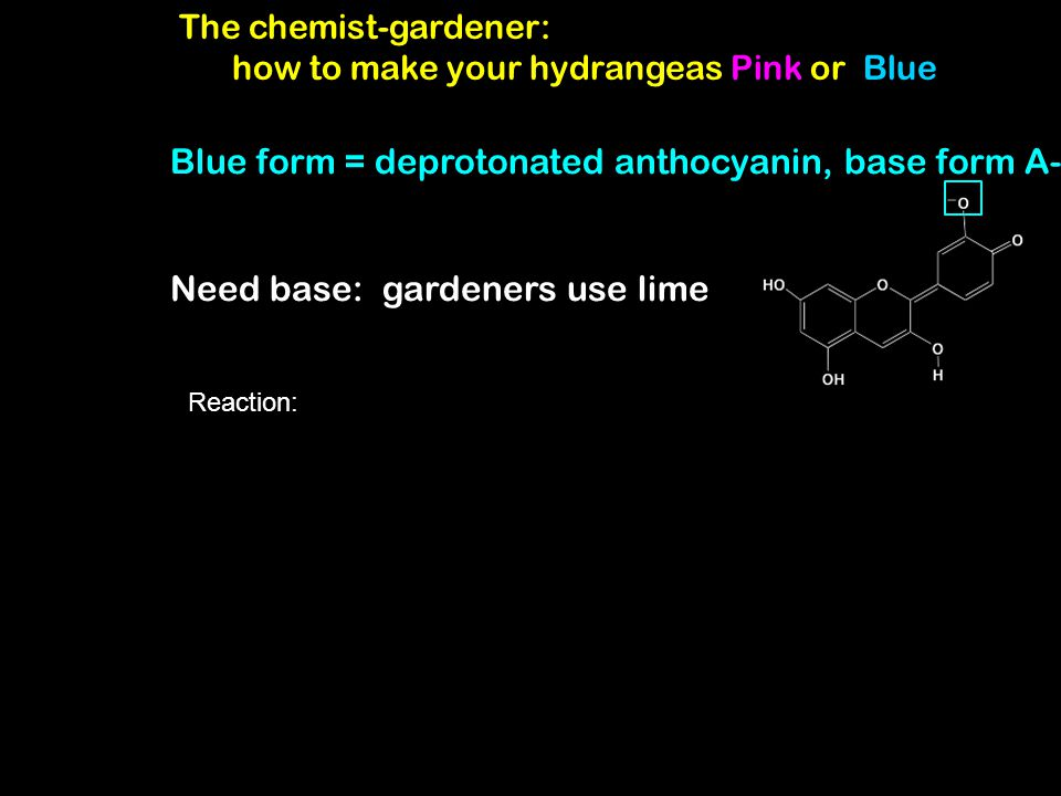 The chemist-gardener: how to make your hydrangeas Pink or Blue Blue form = deprotonated anthocyanin, base form A- Need base: gardeners use lime Reacti